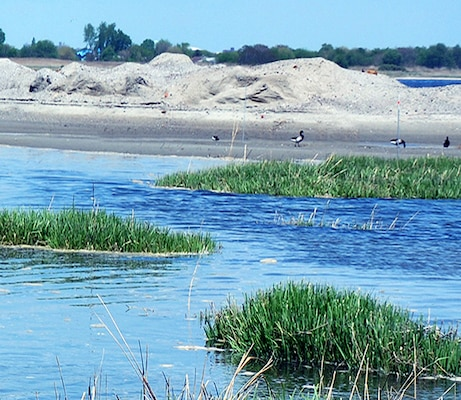 It is estimated that approximately 1,400 acres of tidal salt marsh have been lost from the marsh islands in Jamaica Bay, New York since 1924, with the system wide rate of loss rapidly increasing in recent years. From 1994 and 1999, an estimated 220 acres of salt marsh were lost at a rate of 47 acres per year.