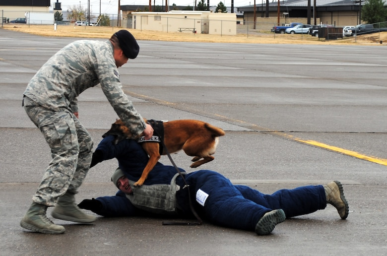 Senior Airman Kyle Kottas, 341st Security Forces Squadron, military working dog handler, left, demonstrates how to apprehend a subject as Senior Airman Michael Caruso, 341st SFS military working dog handler, lies on the ground during a controlled aggression demonstration on the flight line. Bibi, a 7 year-old Belgium Malinois, was the military working dog in the demonstration. (U.S. Air Force photo/Airman 1st Class Katrina Heikkinen)