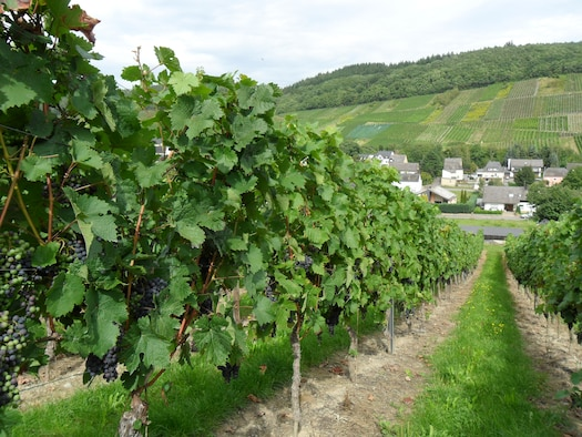 SPANGDAHLEM AIR BASE, Germany -- A distinctive product of the Mosel region