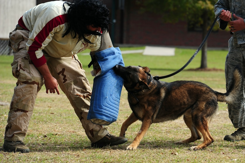 """Senior Airman Luis Diaz Garcia, 628th Security Forces Squadron K-9 handler, is being bitten by military working dog Hulk during a drug-detection demonstration for Red Ribbon Week Oct. 30, 2012, at Hunley Park Elementary School, North Charleston, S.C. This year's Red Ribbon Week them is """"The Best Me Is Drug Free."""" The campaign began after the 1985 murder of Federal Drug Enforcement Administration Agent, Enrique Camarena, while he was investigating Mexican drug traffickers. Red Ribbon Week allows educators, parents, community groups, students and others to focus on the work being done by the many who have pledged to live drug free. (U.S. Air Force photo/ Airman 1st Class Chacarra Walker)"""