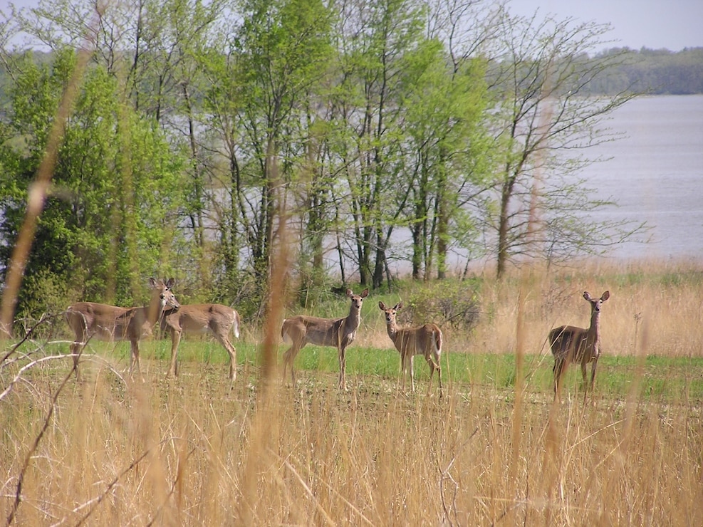 Wildlife Long Branch Lake