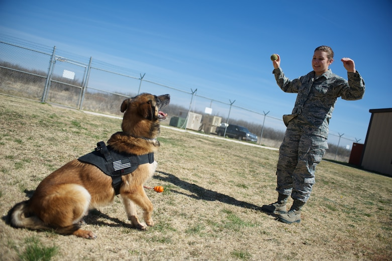 U.S. Air Force 2nd. Lt. Karrissa Garza, 7th Logistics Readiness Squadron, gives a speak command to military working dog (MWD) Condor March 26, 2013, at the 7th Security Forces Squadron MWD Compound on Dyess Air Force Base Texas. Garza is in the process of adopting Condor upon his retirement from the Air Force and pays frequent visits in order to form a bond with the dog. Condor, an 8 year old belgian malinois, is a veteran of Operation Iraqi Freedom as well as supported the U.S. Secret Service. (U.S. Air Force Photo by Tech. Sgt. Joshua T. Jasper/Released)