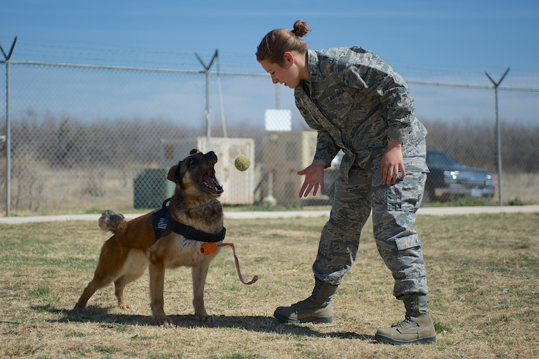 U.S. Air Force 2nd. Lt. Karrissa Garza, 7th Logistics Readiness Squadron, plays with military working dog (MWD) Condor March 26, 2013, at the 7th Security Forces Squadron MWD Compound on Dyess Air Force Base Texas. Garza is in the process of adopting Condor upon his retirement from the Air Force and pays frequent visits in order to form a bond with the dog. Condor, an 8 year old belgian malinois, is a veteran of Operation Iraqi Freedom as well as supported the U.S. Secret Service. (U.S. Air Force Photo by Tech. Sgt. Joshua T. Jasper/Released)