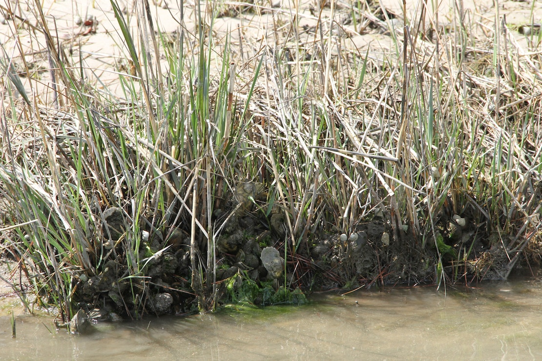 Lynnhaven River basin ecosystem restoration study
