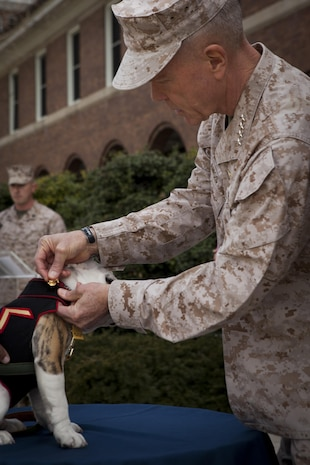 Gen. James F. Amos, commandant of the Marine Corps, presents Pfc. Chesty XIV, official mascot of the Marine Corps in-training, his eagle, globe and anchor emblems signifying his passage into the Corps during a ceremony at Marine Barracks Washington, D.C., April 8. Amos pinned the coveted emblems on the young English bulldog accompanied by Sgt. Maj. Micheal P. Barrett, sergeant major of the Marine Corops. The ceremony marked the conclusion of Chesty XIV's recruit training and basic indoctrination into the Corps. In the upcoming months, Chesty XIV is scheduled to attend and complete more obedience training to compliment his military training. The young Marine will serve in a mascot-apprentice roll for the remainder of the summer working alongside his predecessor and mentor, Sgt. Chesty XIII, until the sergeant's retirement which is expected in late August.