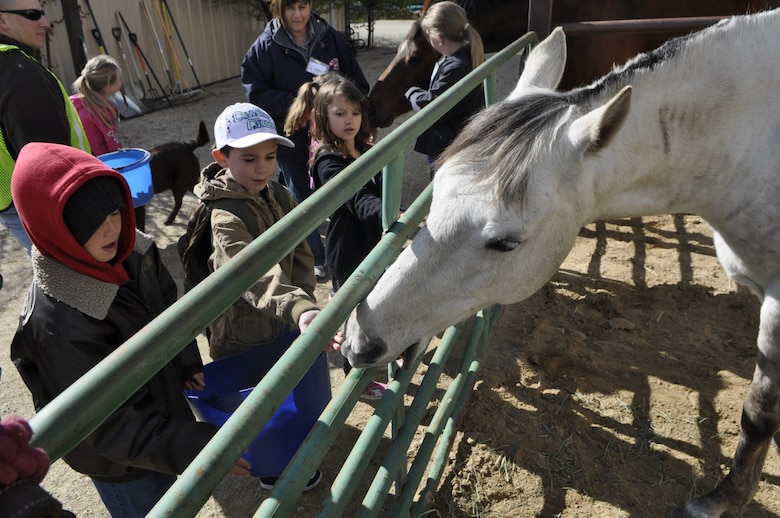 """Kids of the Nevada National Guard Child & Youth program taking turns feeding the horses during the April, 2013 """" Round 'em Up Spring day camp.""""  April is the Month of the Military Child, and the camp gave over 25 military kids a chance to interact with various barnyard animals, learn equine safety, health and diet, and basic riding skills.  USAF photo by Capt. Jason Yuhasz 152AW/PA (released)."""