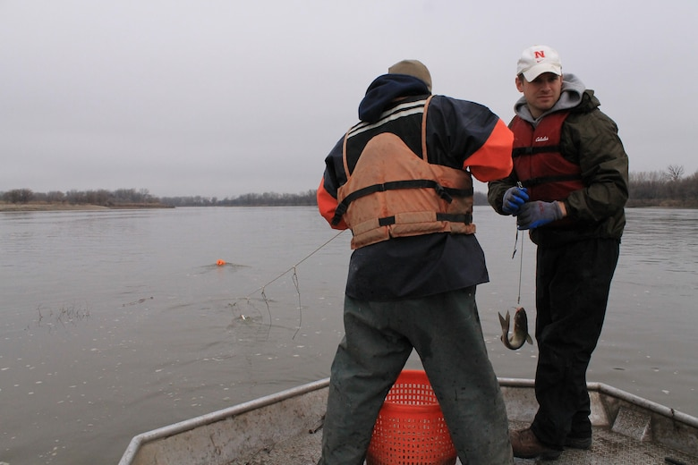 Omaha District Leadership Development Program participant and Engineer in the Hydrologic Engineering branch, Josh Melliger helps bring in a channel catfish during Pallid Sturgeon broodstock collection efforts on the Missouri River, April 8.