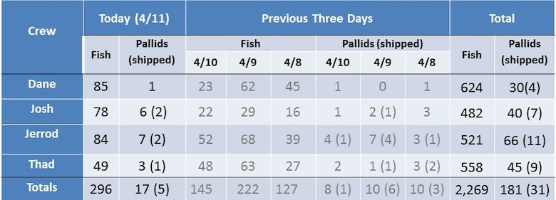"""""""The Big Board"""" Pallid Sturgeon Broodstock collection totals through April 11. April 12 is the last day of the effort. Five fish were sent to the Blind Pony Fish Hatchery on April 11."""