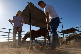 Lance Cpl. Kathryn Howard and Lance Cpl. Luis Botero pick up horse manure during the Single Marine Program's volunteer event at the Stepp Stables here April 17. Howard is a photographer with Headquarters and Support Battalion's Combat Camera and Osborne is a flight line mechanic with Marine Light Attack Helicopter Squadron 469 here.