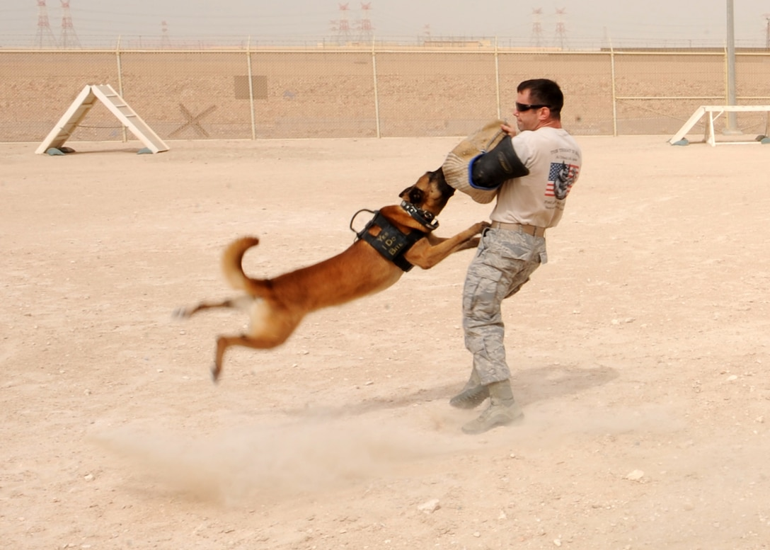SOUTHWEST ASIA - Tech. Sgt. David Helmbrecht, 379th Expeditionary Security Forces Squadron kennel master, swings Nico after the military working dog successfully attacks the bite sleeve in the obedience yard, April 23. Because of Nico's weight and the force of his momentum when he attacks, dog handlers swing him when they wear the bite suit to help prevent Nico from injuring himself. Helmbrecht is deployed from Grand Forks Air Force Base, N.D., and Nico is deployed from Travis Air Force Base, Calif. (U.S. Air Force photo/Staff Sgt. Joel Mease)