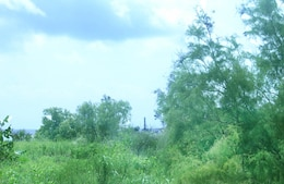 The Charleston District will be clearing brush that has grown on the Morris Island disposal site in order to pump dredged material from Charleston Harbor.