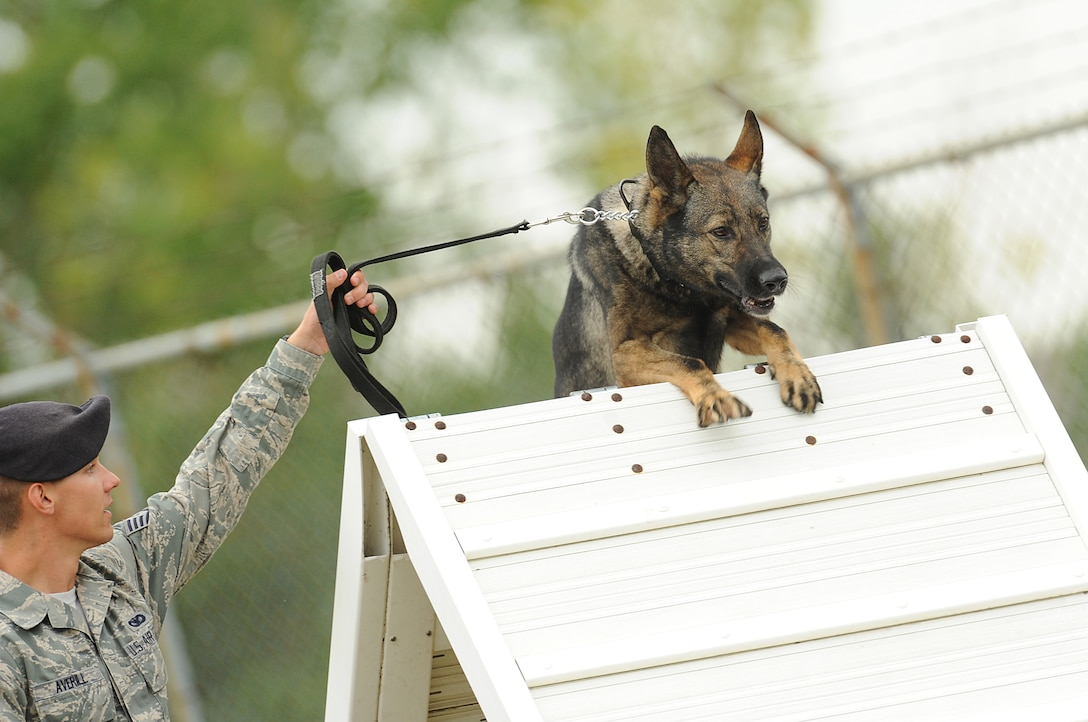 Staff Sgt. Christopher Averill, 5th Security Forces Squadron military working dog handler, leads his 5-year-old German Sheppard Kety over an A-frame obstacle the 2013 North Dakota Peace Officer Association K-9 Police Trials at Minot Air Force Base, N.D., Aug. 14, 2013. In addition to competing against others from their squadron, Averill and Kety competed against handlers from state and local law enforcement agencies as well as security forces handlers assigned to Grand Forks Air Force Base, N.D. The course tested teamwork between handlers and K-9s in addition to serving as a chance for them to exchange advice and techniques. (U.S. Air Force photo/Airman 1st Class Stephanie Sauberan)