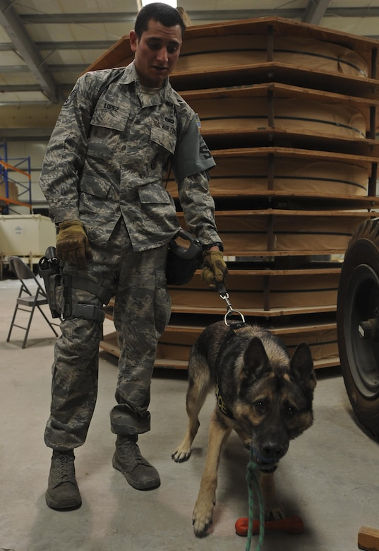 Mayo, 380th Expeditionary Security Forces Squadron military working dog, bites on his reward given to him by Staff Sgt. Justin Lopez, 380th ESFS MWD handler, after searching for explosives or narcotics during training in a warehouse at an undisclosed location in Southwest Asia Aug. 8, 2013. The training was designed to test the MWD's senses for detecting explosives or narcotics in different quantities. Lopez and Mayo are deployed from Luke Air Force Base, Ariz.