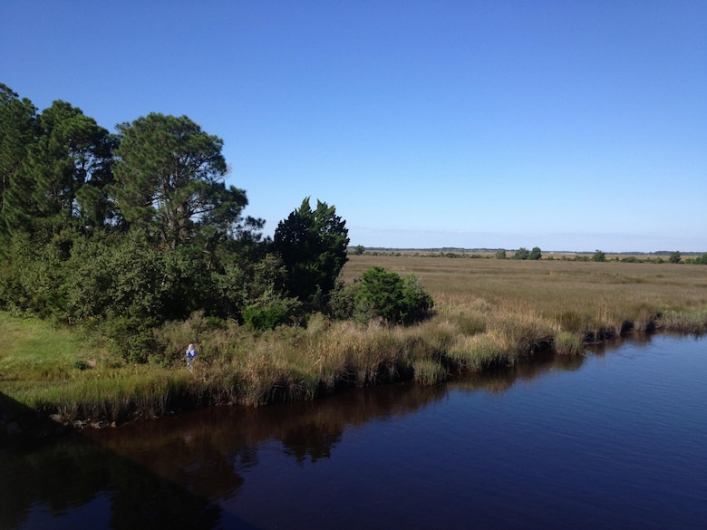 Enge's estate preserved this classic salt marsh wetland habitat along the Nassau River, viewed from the Nassau River Bridge, dominated by black needle rush and smooth cordgrass.