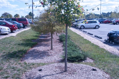 Bioretention with impervious disconnection in parking lot at Fort Meade, Maryland.