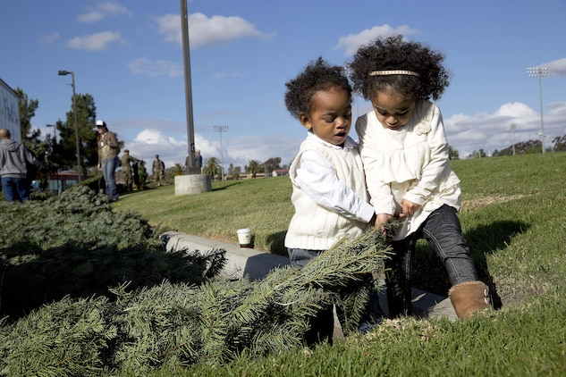 Sarya and Tre Dixon help each other search for a Christmas tree during the Trees for Troops 2013 event. Approximately 800 trees were delivered to Pendleton for the annual Trees for Troops giveaway Dec. 6. Trees for Troops is a program that collects and delivers Christmas trees to service members and their families at 60 military bases in the U.S. and overseas.