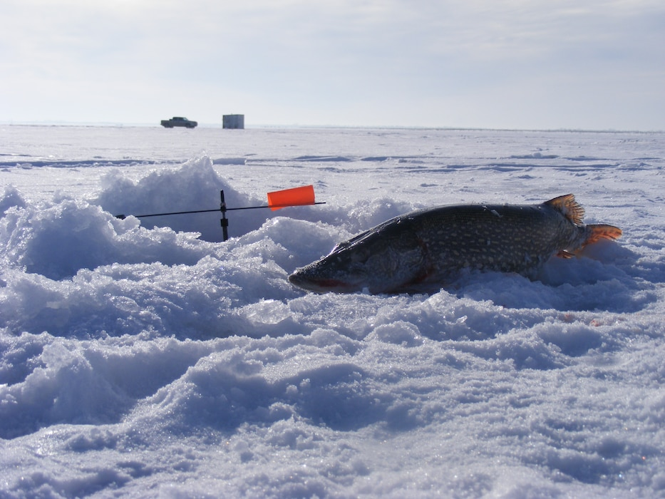 A Northern Pike caught in March 2013 while ice fishing on Lake Sakakawea/Garrison Dam Project on the Northeast side of the lake in Steinke Bay, which is near Sportsmen's Centennial Park access and Steinke WMA access. Ice Fishing is a popular outdoor winter activity for may North Dakotans.