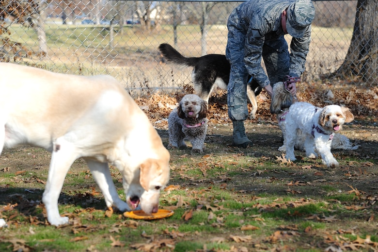 U.S. Air Force Master Sgt. Daniel Lauseng from the 509th Operations Support Squadron plays with his pets at the opening of the Whiteman Dog Park, Dec. 3, 2013, at Whiteman Air Force Base, Mo. The park is open to all puppies at least 4 months old.  (U.S. Air Force photo by Staff Sgt. Brigitte N. Brantley/Released)