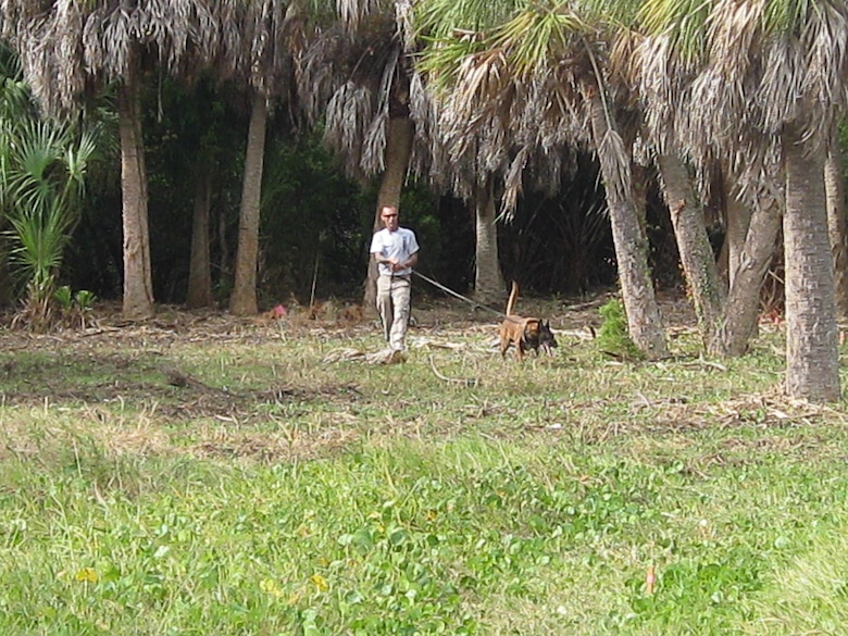 Jack, a four-year-old Belgian Malinois, leads handler Roger Tappan of AMK9 as he works to locate his target. Jack is one of two dogs working at the Mullet Key Formerly Used Defense Site at Fort DeSoto Park that have also completed tours in Afghanistan.
