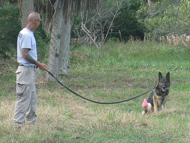 Don, a five-year-old German Shepherd, proudly sits to indicate to his handler, Roger Tappan of AMK9 that he has located his target.