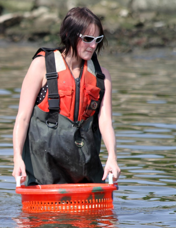 Kristen Donofrio, team lead for the Norfolk District's Science, Technology, Engineering and Math, or STEM, team, prepares to transfer baby oysters from the floats to the sanctuary reef July 12, 2012. Donofrio often volunteers with the Corps' oyster gardening project.