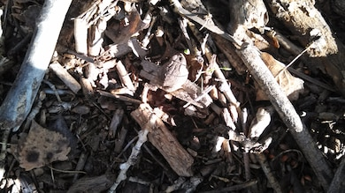 """A camouflaged frog in the Middle Rio Grande Restoration Project"" Photo by Ondrea Hummel, Sept. 19, 2013."