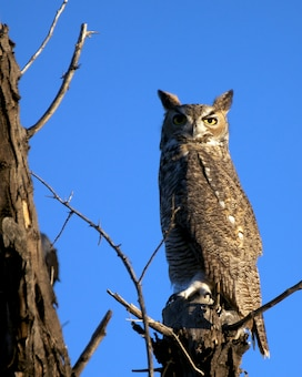 "ALBUQUERQUE, N.M., -- 2013 Photo Drive submission. Photo by David Abbott, Oct. 22, 2013. ""Owl in a tree near the Rio Grande"""