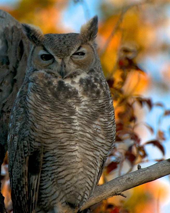"ALBUQUERQUE, N.M., -- Entry in the District's 2013 Photo Drive. Photo by David Abbott, Oct. 22, 2013. ""Owl on a branch near the Rio Grande"""