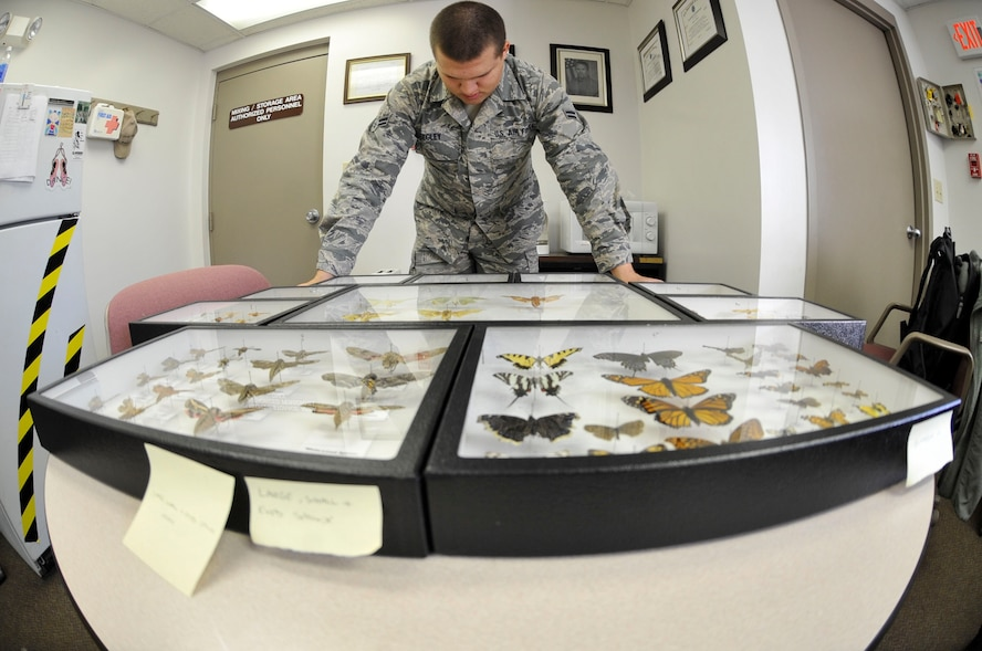 WHITEMAN AIR FORCE, Mo. – Airman 1st Class Zachary Kegley, 509th Civil Engineer Squadron Pest Management Apprentice, looks at moth display, Jan. 23. Whenever Pest Control Management captures a new species, they bring it back to the lab to identify what type of insect it is. (U.S. Photo by Airman 1st Class Keenan Berry) (Released)