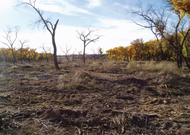 HEAT evaluated and proposed ecosystem restoration alternatives for the Middle Rio Grande Bosque ecosystem in an efficient, effective, and transparent manner.
