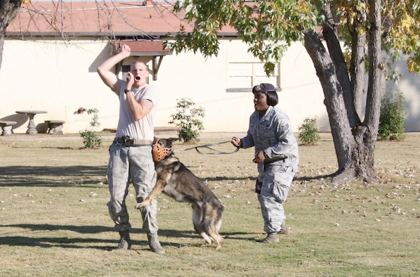 "Staff Sgt. Brent Olson and Staff Sgt. Sansha Richard enact an aggressor situation where military working dog, Art, is given the order to ""attack."" (U.S. Air Force photo by Rebecca Burylo)"