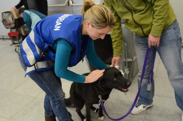 Dr. Jennifer Schiwek, veterinarian of the Kaiserslautern County Veterinary Office, examines Charlie Jan. 15 after arrival from the states at the Ramstein Passenger Terminal. The black Labrador mix is owned by Capt. Heath Hunter, who will be assigned to the 52nd Operations Group in Spangdahlem.  Starting Feb. 1, pet owners importing pets from non-European Union countries have to pay a pet fee of €55. (U.S. Air Force photo/2nd Lt. Kay M. Nissen)