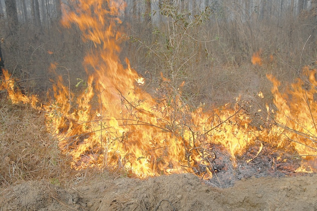 Marine Corps Logistics Base Albany's Natural Resources Section is currently conducting prescribed burning of base timber. Thirty to 40 acres is the average area burned on a typical day. There is about 725 acres of forest scheduled to be burned by the end of March.