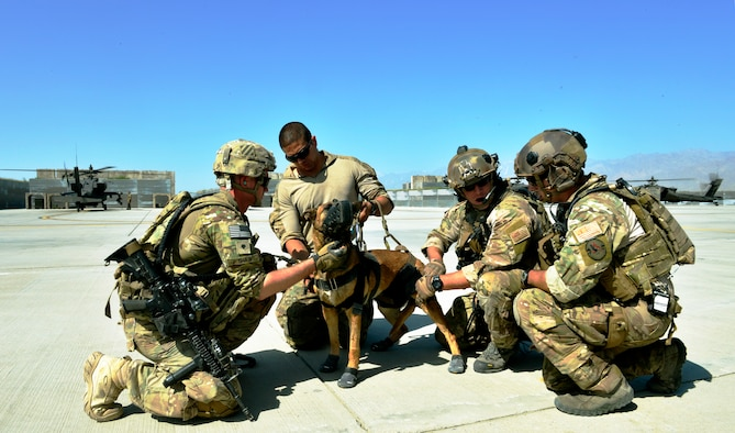 Search And Rescue Dog Training Kentucky