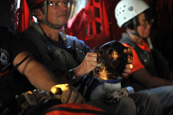 El Paso County Search and Rescue K-9 Tucker watches as a CH-47 Chinook helicopter he is in takes off for an exercise search and rescue mission for a simulated crashed aircraft at the U.S. Air Force Academy, Colo. Springs, Colo. during a Vigilant Guard exercise, July 22, 2013. The Vigilant Guard exercise is a weeklong exercise full of scenarios based on wildfires, tornadoes, air craft accidents, hazmat response, search and rescue, triage, medevac and other emergency-response measures. The training and experience gained from this exercise will provide the Colorado National Guard and supporting military units an opportunity to improve cooperation and operational relationships with their local, state, private sector, non-governmental organizations and federal partners. (U.S. Air National Guard photo by Tech. Sgt. Wolfram M. Stumpf)