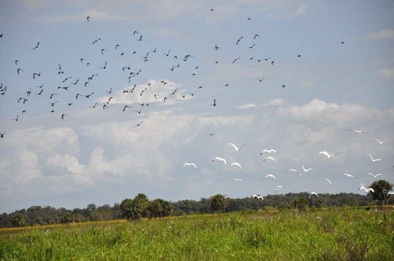 Wood storks fly over Cowbone Marsh in central Glades County, Fla., one of the most valuable aquatic and wildlife resource areas in the country.