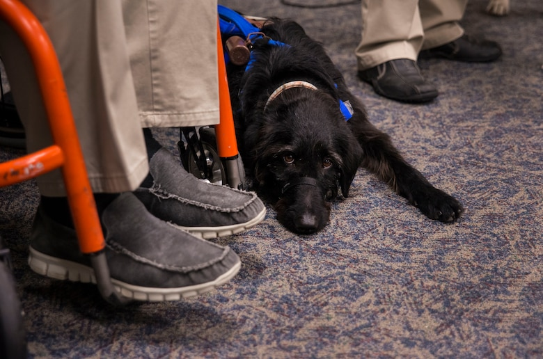 Service dog Malachi lies by his new owner Rick Hayes, during a ceremony  March 21, 2013, at the Naval Consolidated Brig Charleston on Joint Base Charleston – Weapons Station, S.C. The service dogs, trained by the brig prisoners, work with veterans who suffer physical challenges and mental or emotional injuries such as Post Traumatic Stress Disorder. Service dogs are constant companions and can assist the veteran with more than 70 tasks, including retrieving and carrying objects, opening doors, and helping with stress and balance difficulties. Malachi is the 15th dog placed with a wounded warrior at NCBC. (U.S. Air Force photo/ Senior Airman George Goslin)