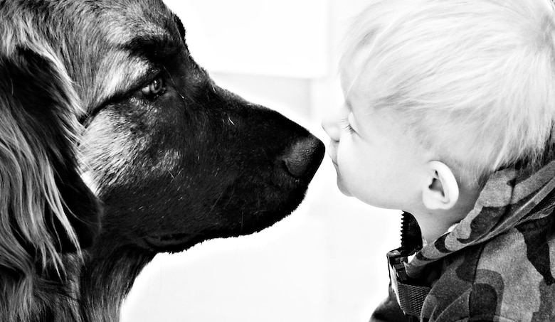One-year old Preston Polkinghorn plants a kiss on one of Linda Bretz's pet therapy dogs, May 2, 2013, at Mountain Home Air Force Base, Idaho. Leaders within the 366th Medical Group have seen first-hand the positive effects Bretz's dogs have on not only the patients but staff as well. (U.S. Air Force photo by Airman 1st Class Shane M. Phipps)