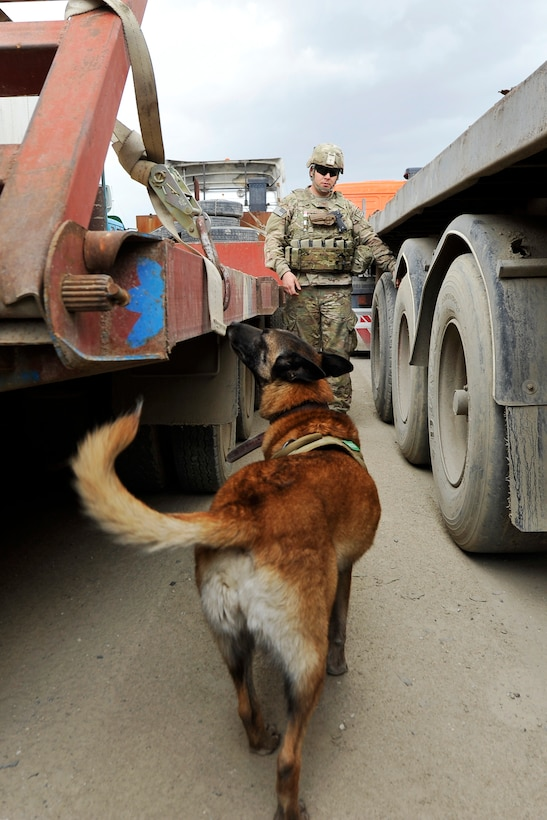 Staff Sgt. Jonathan Cooper, 455th Expeditionary Security Forces Group Military Working Dog handler, and his dog Astra search for Vehicle-Borne Improvised Explosive Devices at Bagram Airfield, Afghanistan, April 29, 2013. Vehicles come from all over Afghanistan and must be searched for VBIED threats before they can enter the installation. (U.S. Air Force photo/Senior Airman Chris Willis)