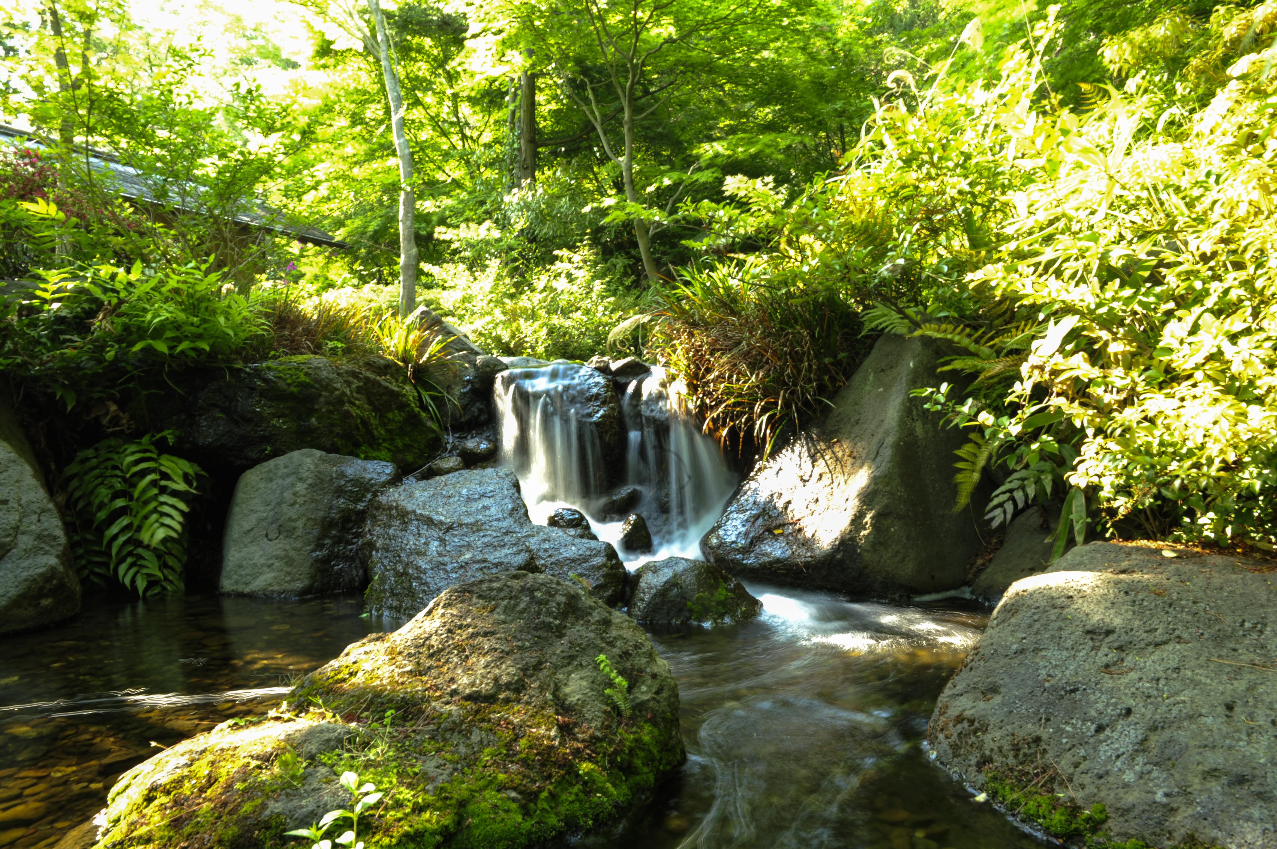 Photos for Small japanese water garden