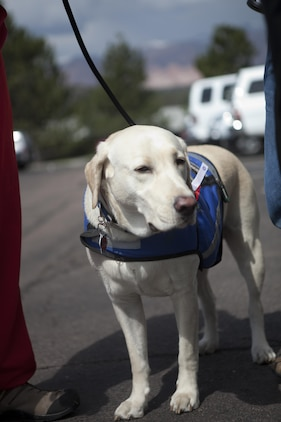 Rocky, Matthew Benack's service dog, accompanies Benack during the 2013 Warrior Games registration, May 10.  Benack, Marine Corps team member, will compete in air rifle, air pistol and archery in this years event.