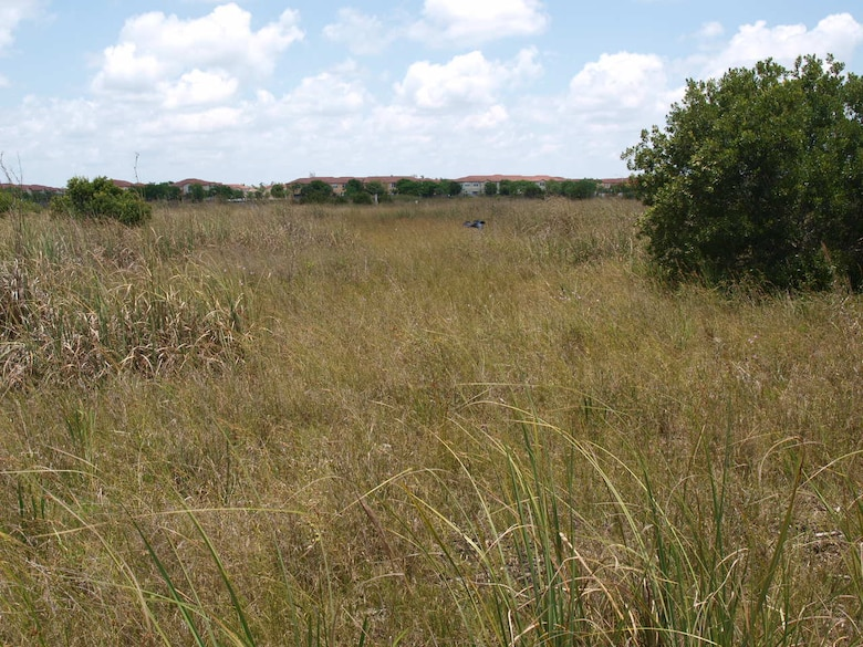After the initial clearing, Melaleuca mulch, similar to what is shown in the photo, was left behind, which suppressed the regrowth of sawgrass and beakrush. Waiting for the decay of the mulch and subsequent regrowth would have delayed achievement of the success criteria by approximately 10 years, much longer than the permit allowed. The enforcement case compelled Century to go back to the site and remove the mulch and conduct supplemental plantings in the buffer areas in order to jumpstart the mitigation area so that it met its success criteria within five years.