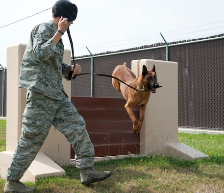 Staff Sgt. Britney Simpson, 47th Security Forces Squadron military working dog handler, runs her partner, Eewok, through an obstacle at Laughlin Air Force Base, Texas, April 16, 2013. Laughlin's dog handlers run their four-legged companions through obstacle courses to keep them fit and well-trained. (U.S. Air Force photo/Airman 1st Class John D. Partlow)