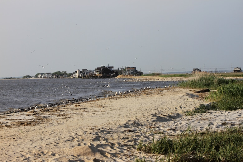 Reeds Beach and Pierces Point are critical habitat for horseshoe crabs and shorebirds. The U.S. Army Corps of Engineers' Ecosystem Restoration project entails a one-time placement of sand to improve habitat.