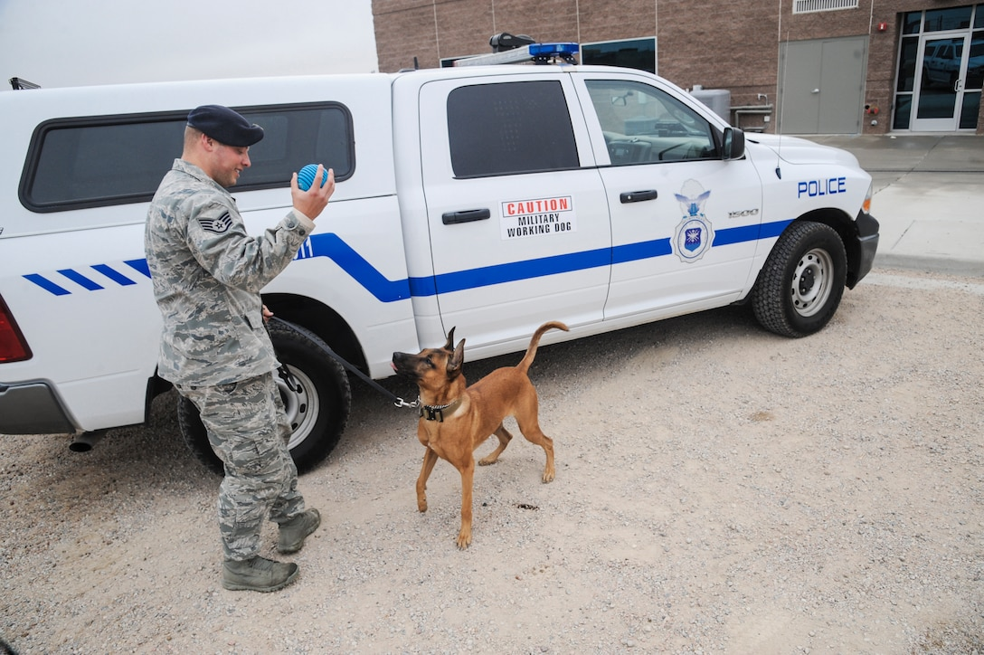 Staff Sgt. Robert Aikins, 460th Security Forces Squadron military working dog handler, and his partner Jeja, 460th SFS military working dog, play in front of the kennels on Buckley Air Force Base, Colo. Jeja is a 2-year-old Belgian Malinois hailing from Germany and is the newest member of the 460th SFS MWD team. (U.S. Air Force photo by Staff Sgt. Christopher Gross/Released)