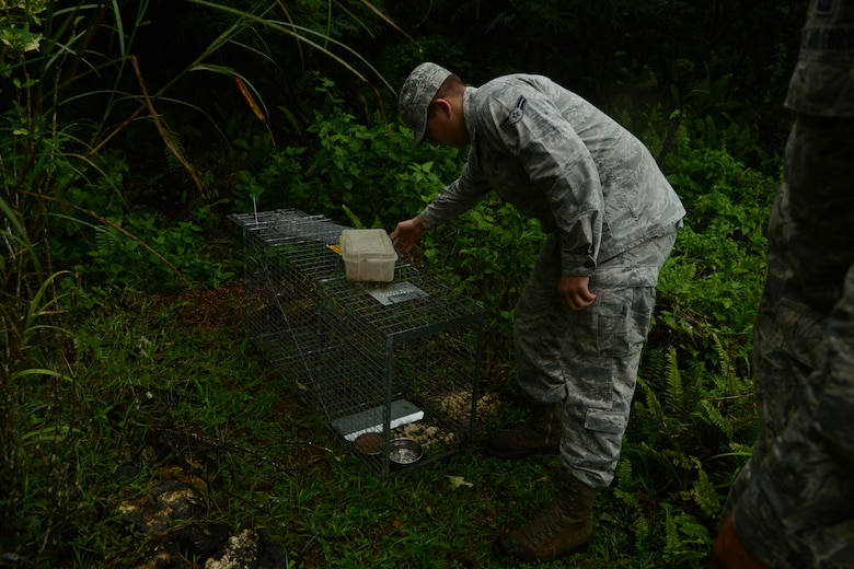 Airman 1st Class Dalton Ridder, 36th Civil Engineering Squadron entomology assistant, checks a feral animal trap Oct. 28, 2013, on Andersen Air Force Base, Guam. When an animal is captured, the Entomology Airmen carefully transport it to a nearby animal shelter. (U.S. Air Force Photo by Airman 1st Class Emily A. Bradley/Released)