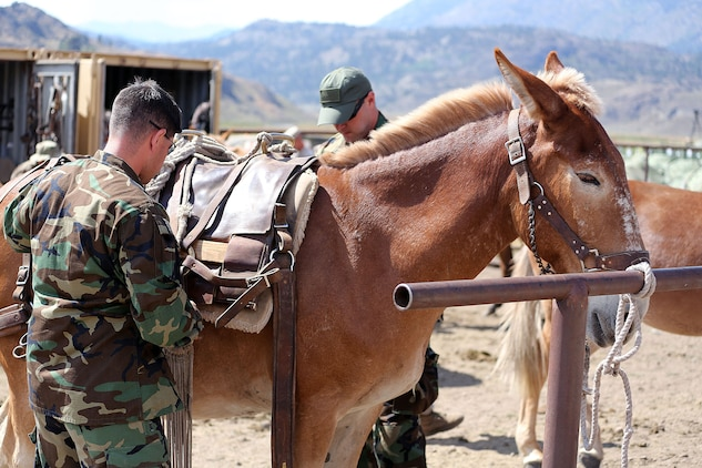 The MWTC near Bridgeport, Calif., has begun teaching an advanced horsemanship training course in order to teach Special Operations Forces (SOF) personnel the necessary skills to enable them to ride horses and move through terreain that can't be navigated by motor vehicles. Conditioned horses are able to travel more than 30 miles per day and can gallop at up to 40-miles per hour for short periods of time.