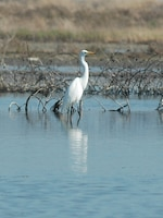 A variety of birds, such as the egret, call Hamilton home.