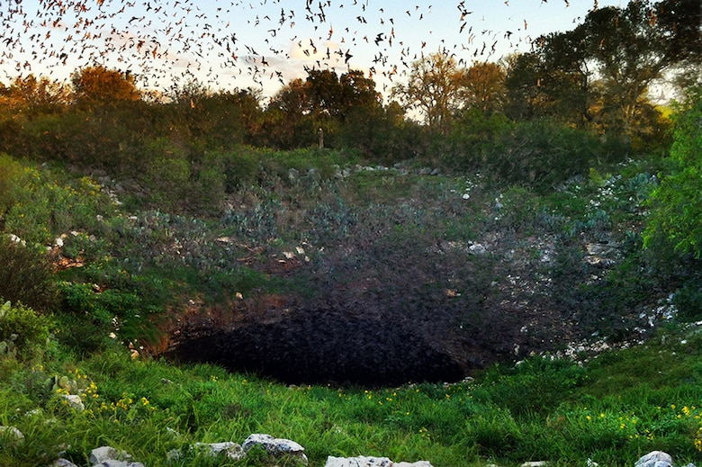 Bats are natural enemies of night-flying insects — and aircraft. The millions of Mexican free-tailed bats at Bracken Bat Cave in Texas eat up to 200 tons of insects nightly, resulting in 20 to 40 feet of guano lying on the cavern floor. The waste goes through a process of natural decomposition aided by guano beetles and decomposing microbes. As a result, guano contains powerful decomposing microbes, which help control soil-borne diseases. Confederate soldiers even mined bat guano for saltpeter to make gunpowder. The U.S. Government at one time even offered free land to those who found guano deposits and made it available to the public.