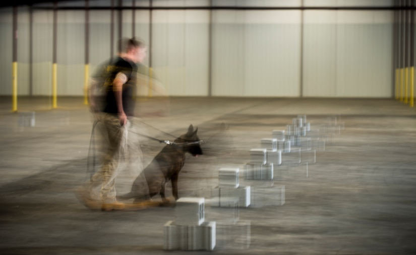 Staff Sgt. Craig Martin, 628th Security Forces K'9 handler, and his dog, Chico, do a search inside a warehouse October 22, 2013 during Explosives detection training in Summerville, S.C. During this training, the dogs undergo obstacles where they searched through blocks or warehouse equipment for substances that are and may be used by terrorists or criminals. (U.S. Air Force/Senior Airman Ashlee Galloway)